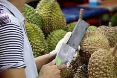 Scherpend een mes voor jackfruit bij de nachtmarkt te openen - Kota Kinabalu Sabah Borneo Malaysia Azië stock afbeelding