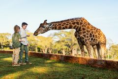 Scherza le giraffe d'alimentazione in Africa Immagini Stock Libere da Diritti