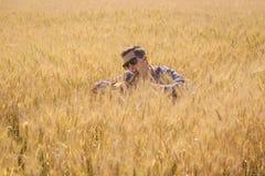 Scherzare dell'uomo ha circondato da un giacimento di grano fotografia stock libera da diritti