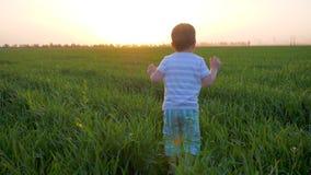 Scherzen Sie das Spielen auf dem Gebiet mit starkem Gras auf Hintergrund der rosa Nachglut im Wochenende stock video