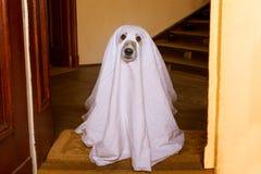 Scherzetto o dolcetto del cane del fantasma di Halloween immagine stock libera da diritti