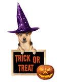 Scherzetto o dolcetto divertente della lavagna della lavagna del cappello della strega del cane di Halloween isolato Immagine Stock