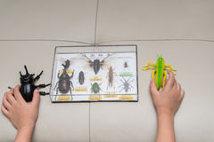 Scherzi il controllo dello scarabeo fittizio una cavalletta contro una scatola della raccolta di esemplari dell'insetto Immagine Stock