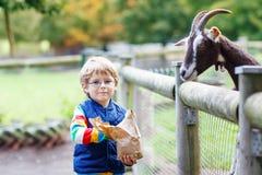 Scherzi il ragazzo con i vetri che alimentano le capre su una fattoria degli animali Fotografia Stock