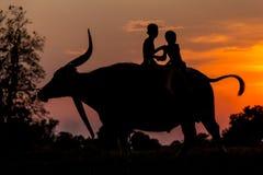 Scherzt den Landwirt, der glücklich auf der Rückseite eines Büffels spielt Lizenzfreie Stockfotos