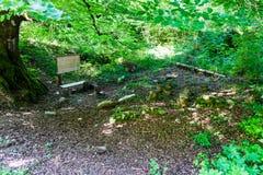 Scherzt Schulboden im Wald für Bildung Stockbild