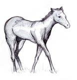 Schets 1 van het paard Stock Foto