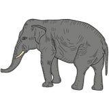 Schets grote Afrikaanse olifant op een witte achtergrond Vector illustratie Stock Afbeelding