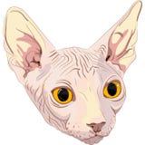 Schets het kattenras Sphynx Stock Afbeelding