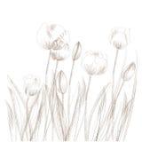 Schets met tulp stock illustratie