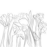 Schets met tulpen en fresia vector illustratie