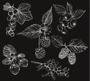 Schets van bessenreeks vectorillustraties Stock Afbeeldingen