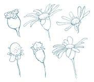Schets van bloemenelementen voor uw ontwerp Royalty-vrije Stock Foto's