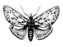 Schets van de vlinder van het tatoegeringsinsect Royalty-vrije Stock Afbeeldingen