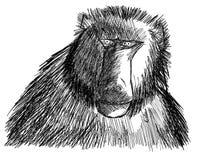 Schets van een geïsoleerde baviaan stock illustratie