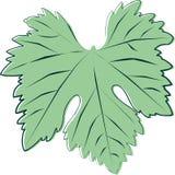 Schets van een groen jong wijnstokblad Stock Afbeeldingen