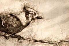 Schets van een Onrijpe Blauwe Vlaamse gaai in Boom royalty-vrije illustratie