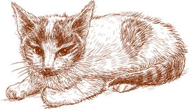 Schets van een rood katje Stock Foto's