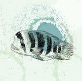 Schets van een vis Royalty-vrije Stock Foto's