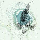 Schets van een vis Royalty-vrije Stock Fotografie