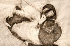 Schets van een Wilde eend Duck Resting Along bij de Rand van het Water stock illustratie