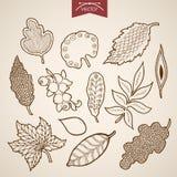 Schets van gravure de uitstekende hand getrokken vectorbladeren Royalty-vrije Stock Fotografie