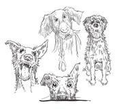 Schets van honden Stock Afbeeldingen
