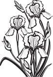 Schets van irisbloemen Royalty-vrije Stock Afbeelding