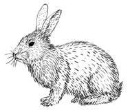 Schets van konijn royalty-vrije illustratie