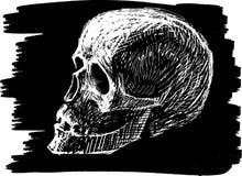 Schets van menselijke schedel Stock Afbeelding
