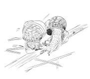 Schets van slak Stock Afbeelding