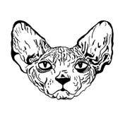 Schets van tatoegering - kattensfinx Stock Afbeelding