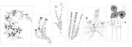 Schets van wilde bloemen Stock Afbeeldingen