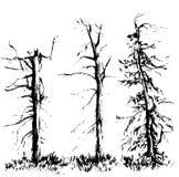 Schetsboom, hand getrokken vectorillustratie op witte achtergrond vector illustratie