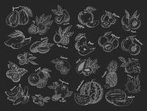 Schetsen van vruchten Vegetarisch voedsel of voeding royalty-vrije illustratie