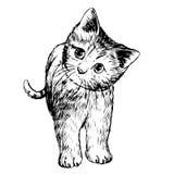 Schetsillustratie uit de vrije hand van weinig kat, katje Royalty-vrije Stock Fotografie
