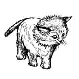 Schetsillustratie uit de vrije hand van weinig kat, katje Royalty-vrije Stock Foto's