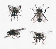 Schetsmatige vliegen Royalty-vrije Stock Afbeeldingen
