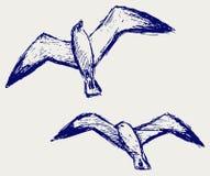 Schetsmatige zeemeeuwen Stock Afbeelding