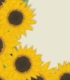 Schetsmatige zonnebloemenkaart Royalty-vrije Stock Foto