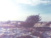 Scheuern Sie Baum auf Strand im Wind stockbilder