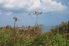 scheuern Sie sich am Rand der Bucht des Kobolds, Polen Stockfotografie
