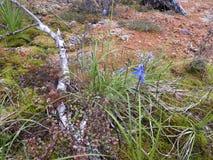 Scheuern Sie Vegetation auf Milford-Bahn in Fiordland, Neuseeland stockfotografie