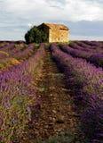 Scheune auf dem Lavendel-Gebiet auf der Hochebene de Valensole Stockfotos