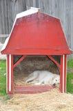 Scheunen-Hund stockbild