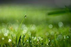 Scheuren van gras Stock Foto