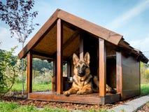 Schäferhund in seiner Hundehütte Stockbild