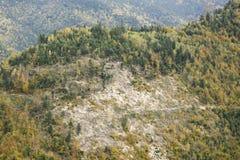 Schiarimento della foresta su una collina della montagna in autunno fotografia stock libera da diritti