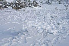 Schiarimento di inverno Fotografia Stock