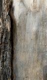 Schicht der Barke auf einem alten Baum mit bloßem Holz stockfotografie